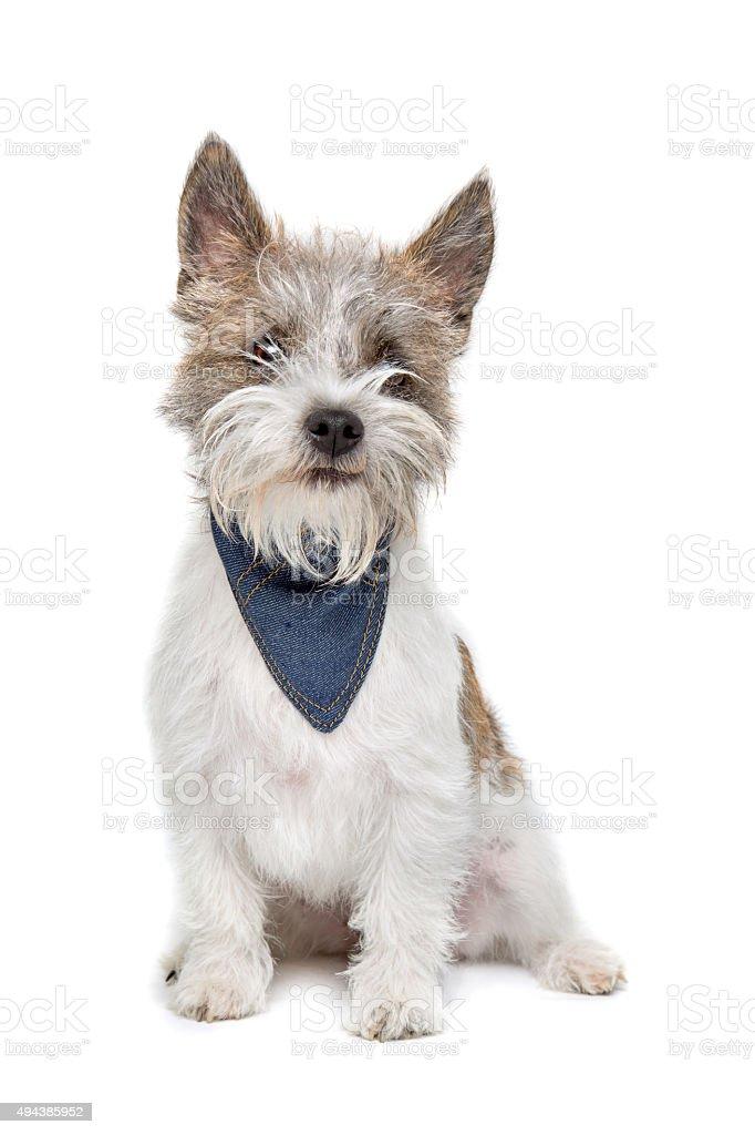mixed breed dog stock photo