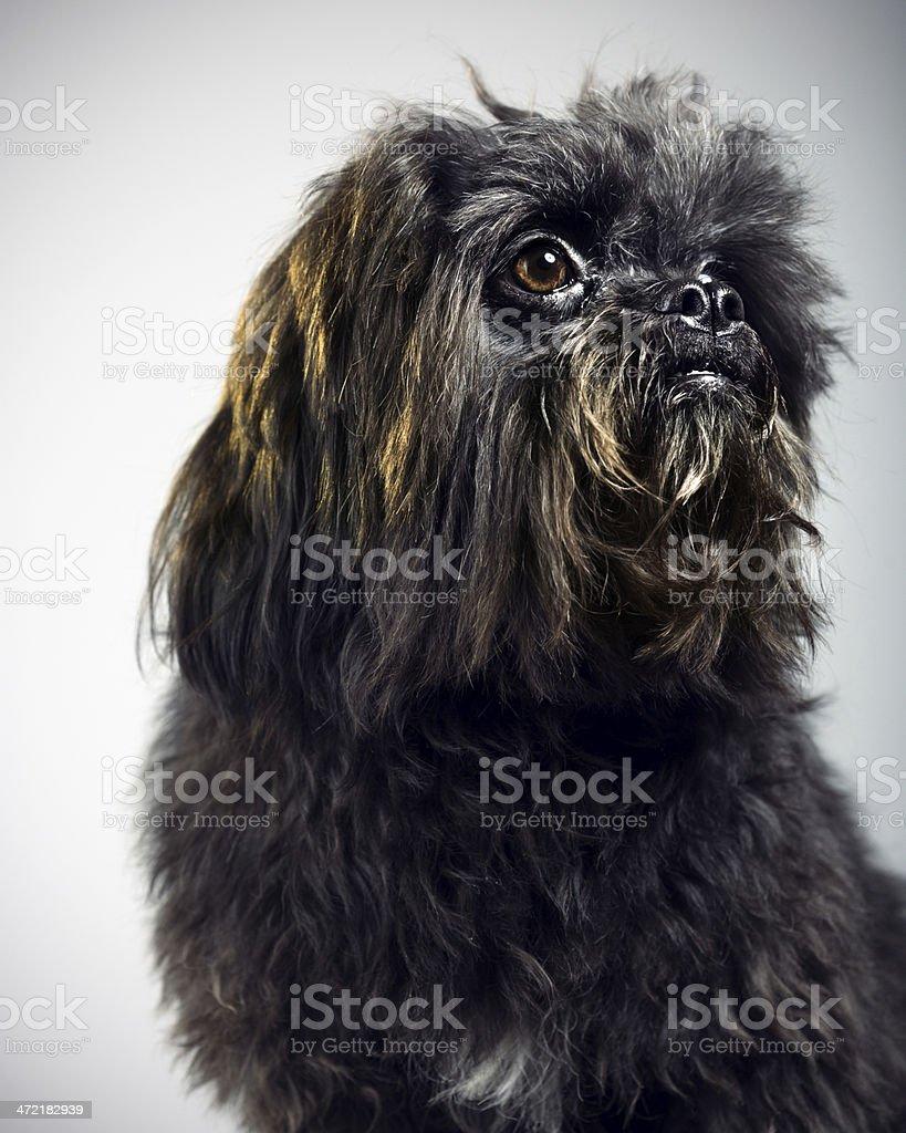 Mixed breed dog portrait royalty-free stock photo
