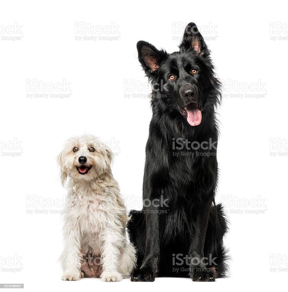 Mixed breed stock photo