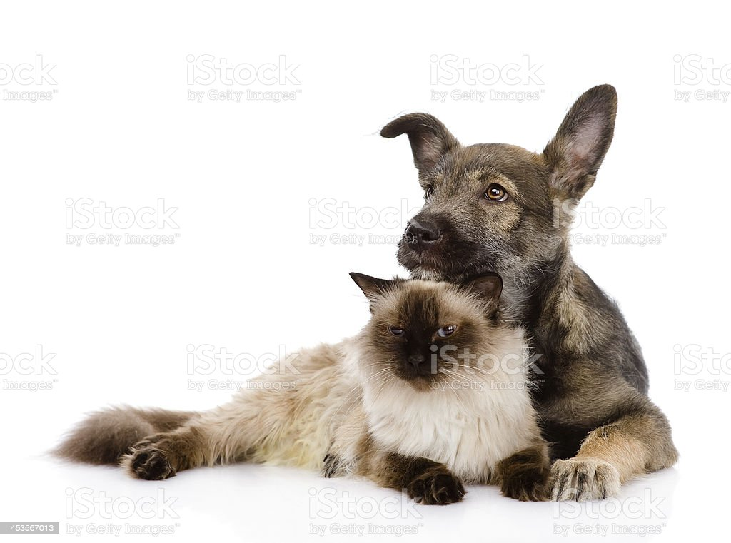 mixed breed puppy and cat together royalty-free stock photo