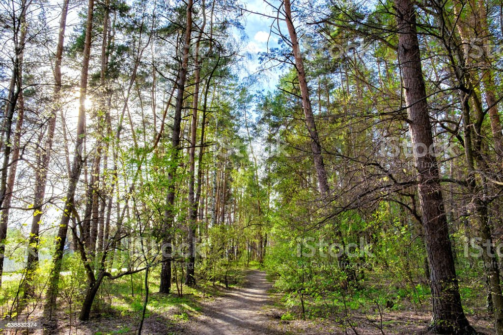 Mixed deciduous-coniferous city park stock photo