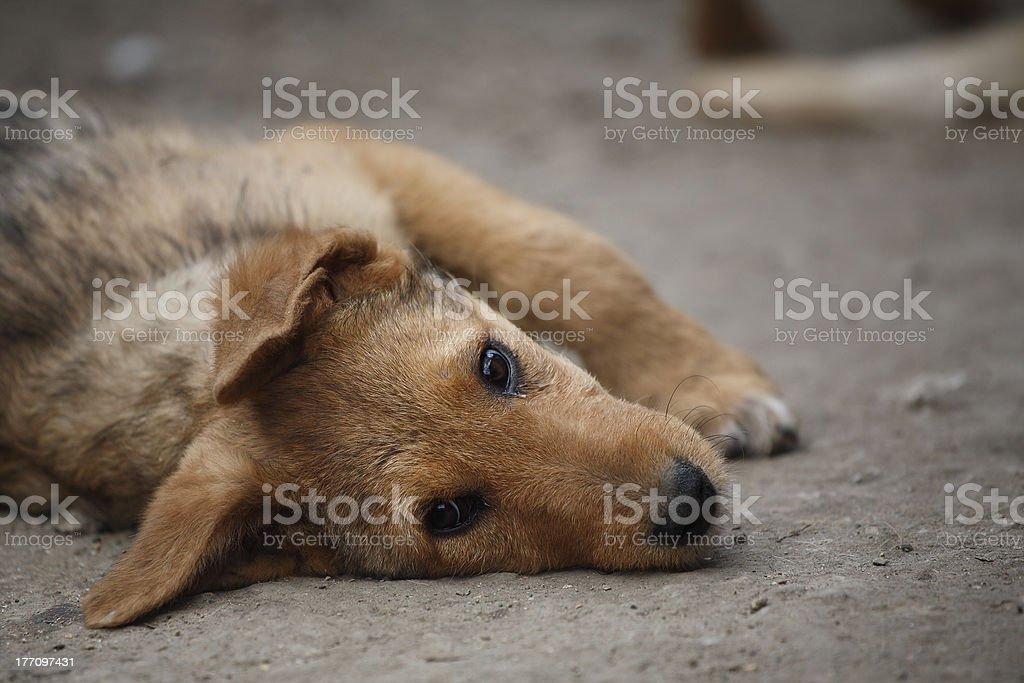 Mixed dog stock photo