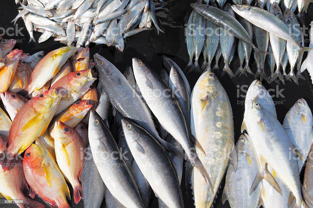 mixed fish catch of the day at  Sri Lanka beaches stock photo