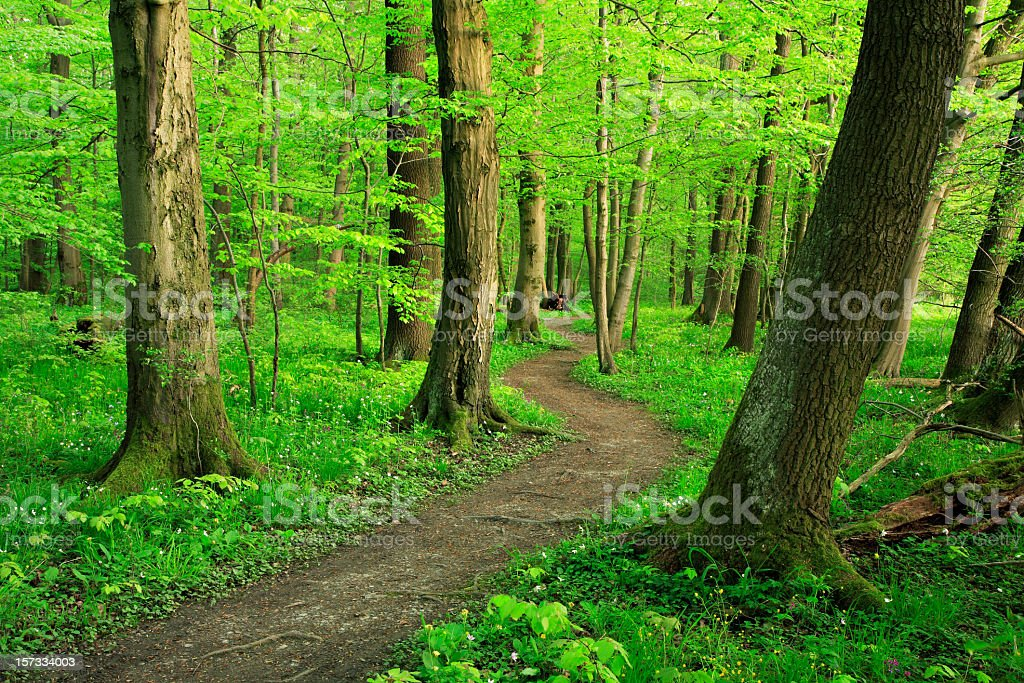 Mixed Forest in Spring stock photo