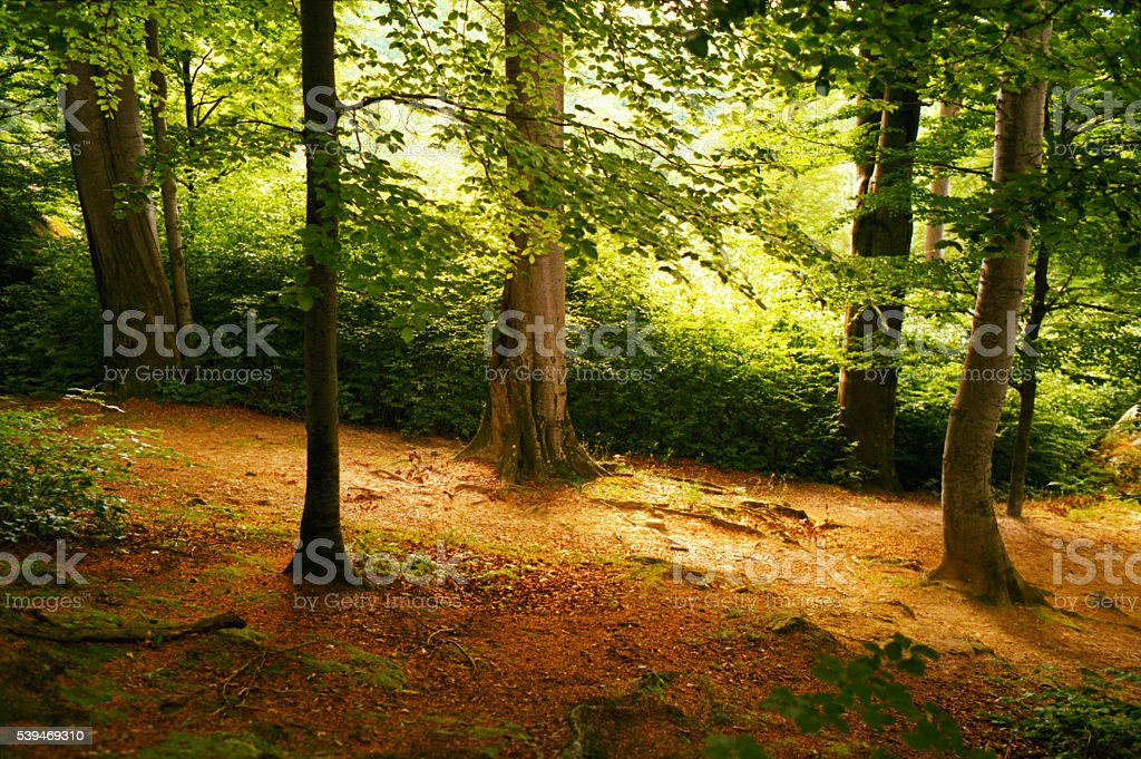 Mixed forest in the Carpathian Mountains. stock photo