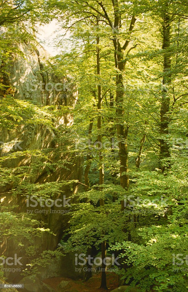 Mixed forest in the Mountains. stock photo