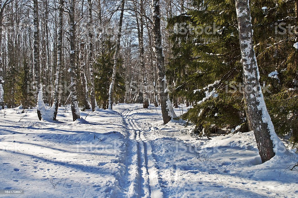 Mixed forest in winter royalty-free stock photo