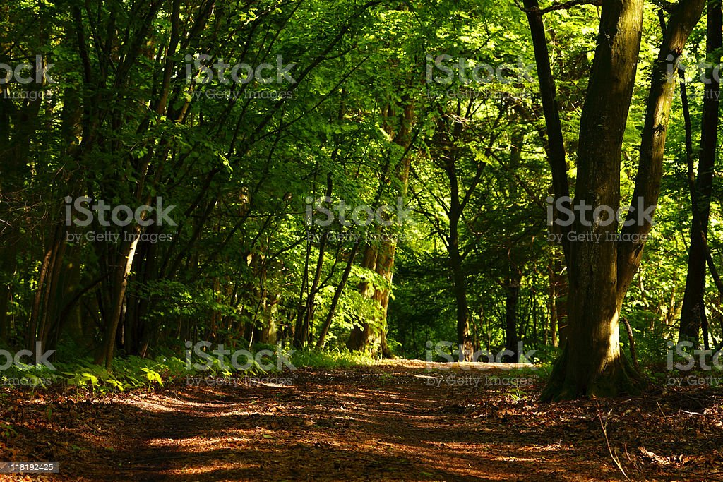 Mixed forest royalty-free stock photo