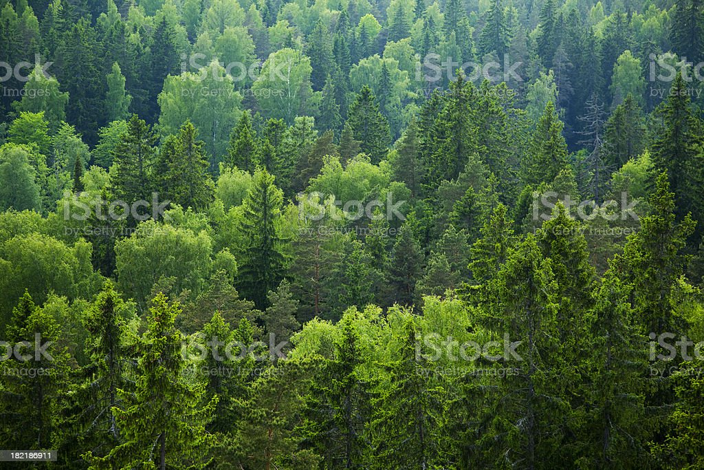 Mixed forest stock photo