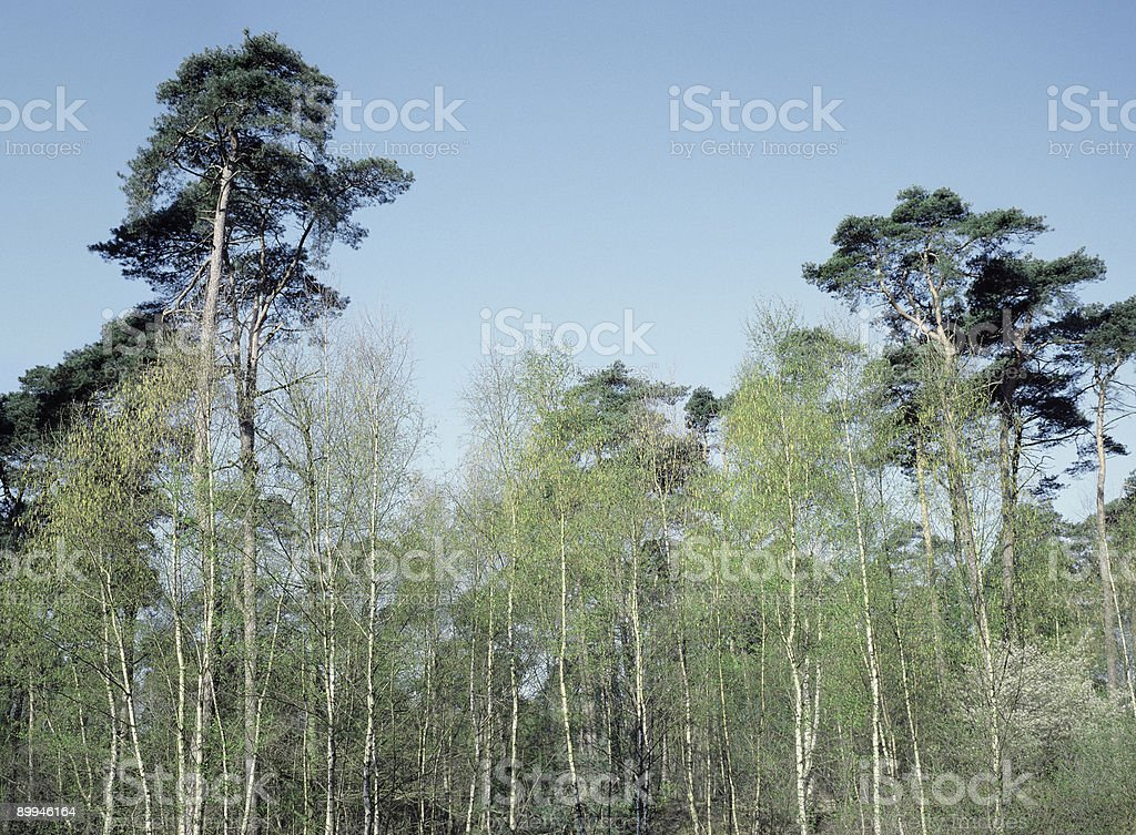 Mixed forest, The Netherlands. stock photo