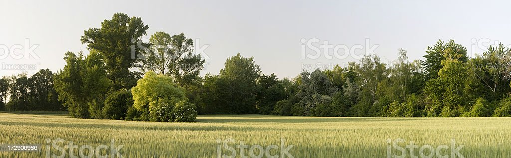 Mixed Forest with cornfield royalty-free stock photo