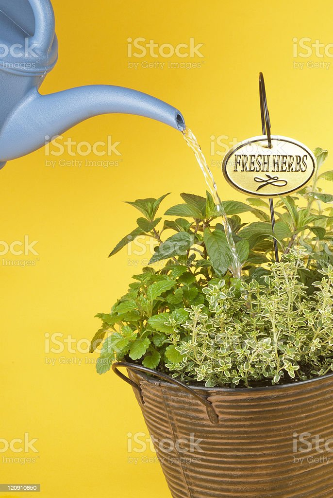 Mixed Fresh Herbs in a Metal Planter stock photo