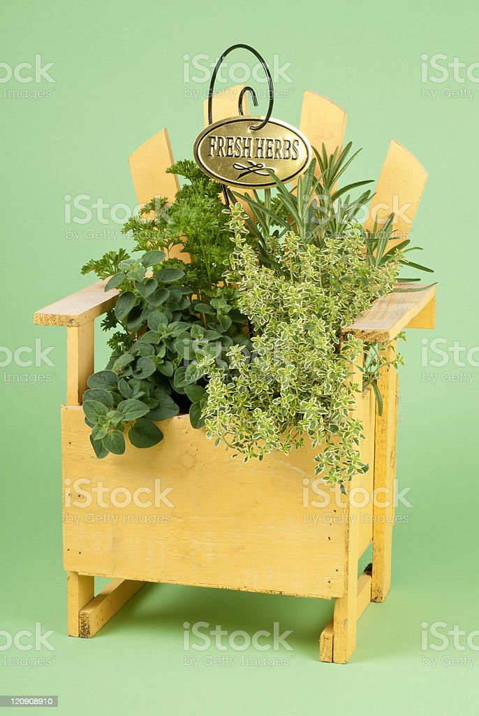 Mixed Fresh Herbs in a Wood Planter royalty-free stock photo