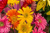 Mixed gerbera flowers with water drops