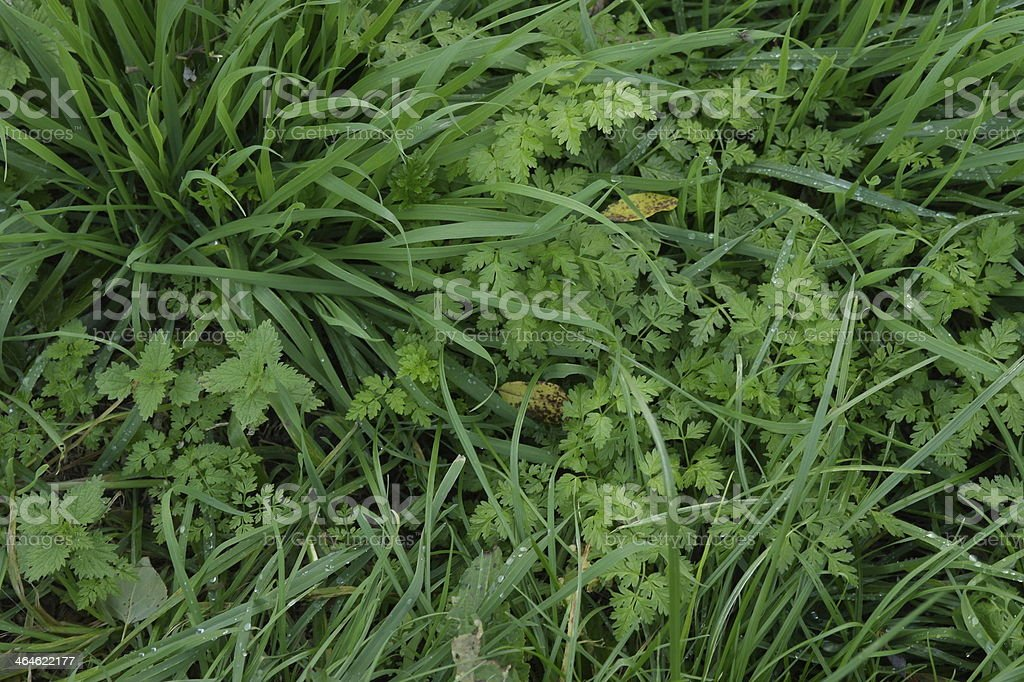 Mélange herbe photo libre de droits