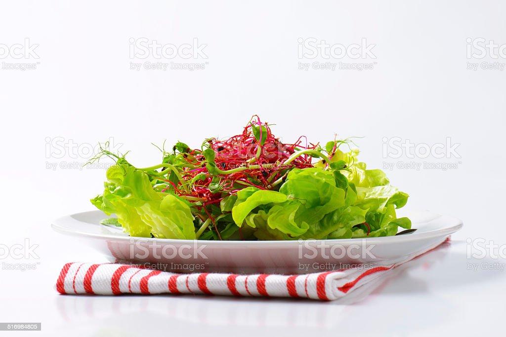 Mixed green salad stock photo