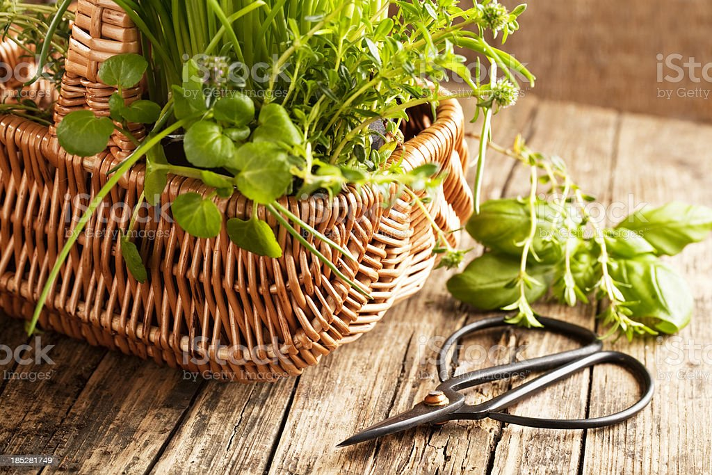 mixed herbs in a basket stock photo