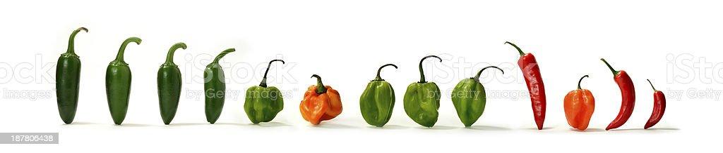 Mixed Hot Chillies 2 stock photo
