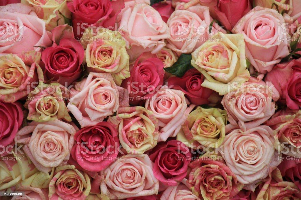 Mixed pink roses stock photo