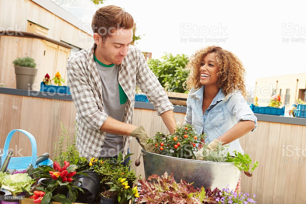 Mixed Race Couple Planting Rooftop Garden Together stock photo