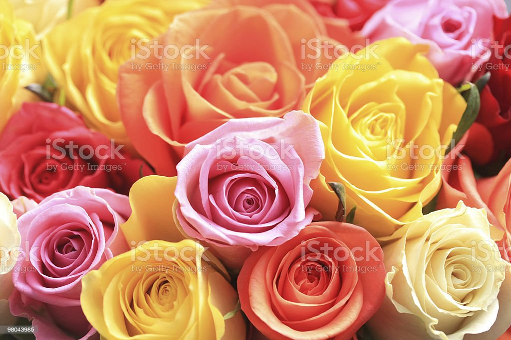 Mixed rose bouquet stock photo