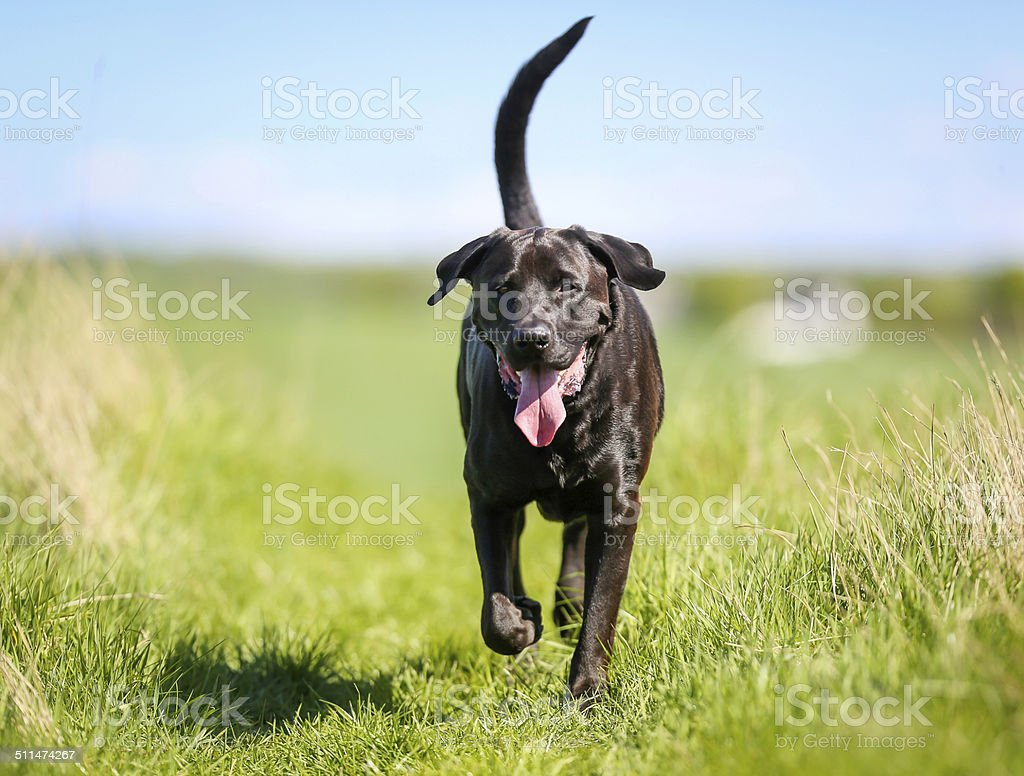 Mixed-bred dog stock photo
