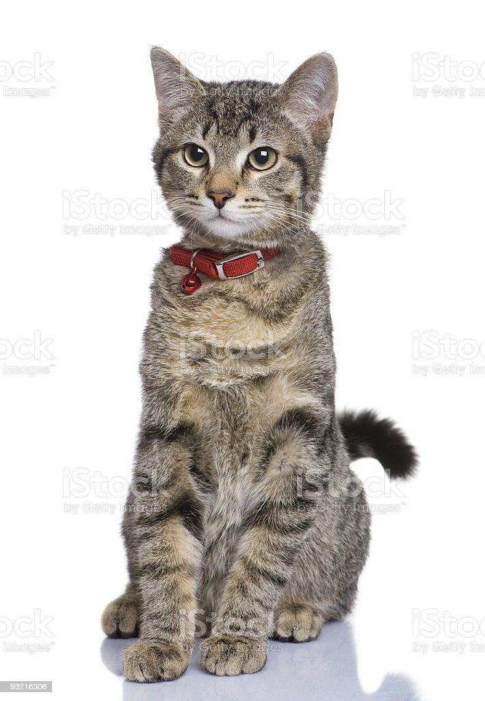 Mixed-breed cat stock photo