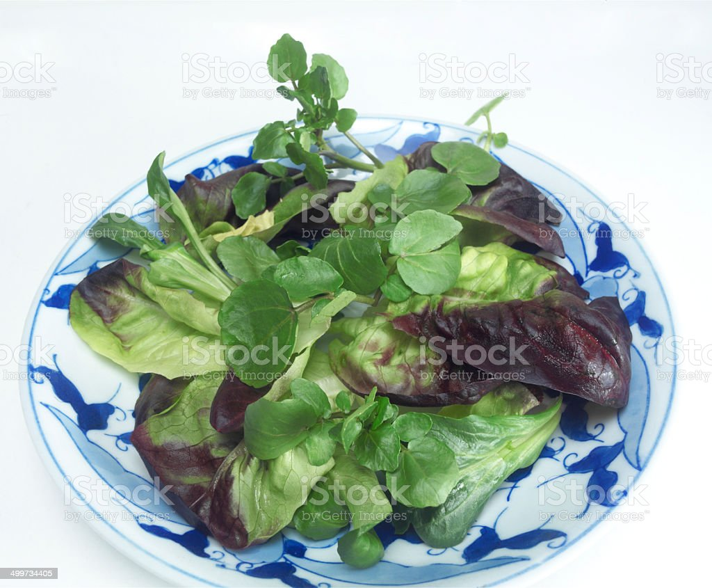 Mixed-leafed Green Salad stock photo