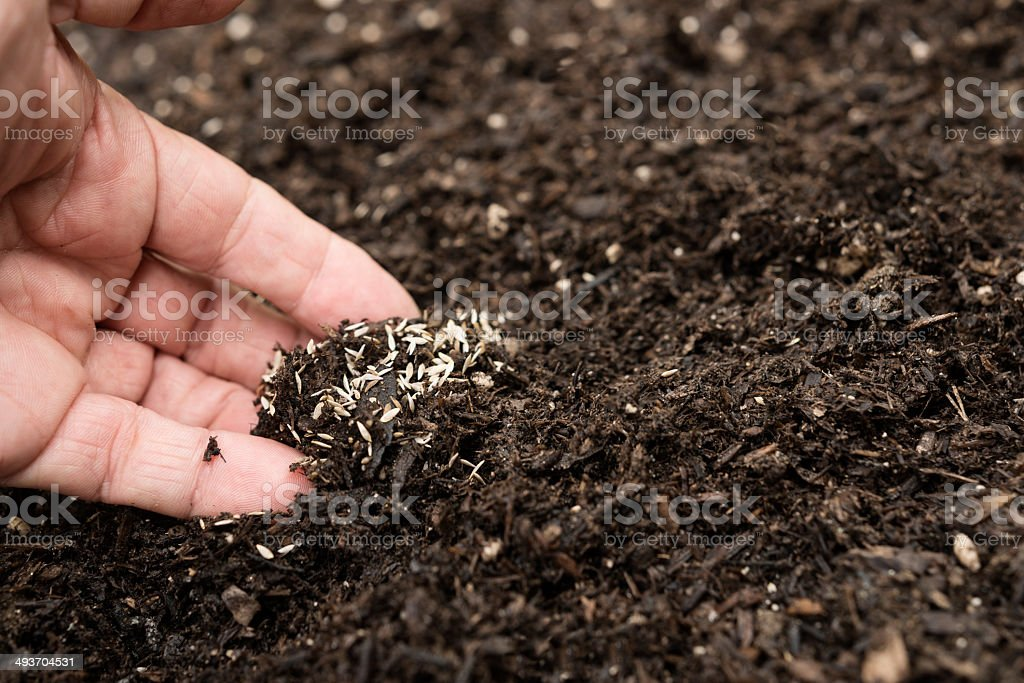 Mixing vegetable seeds into soil royalty-free stock photo