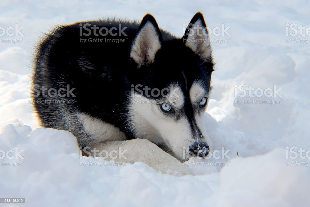 Miya Snow stock photo