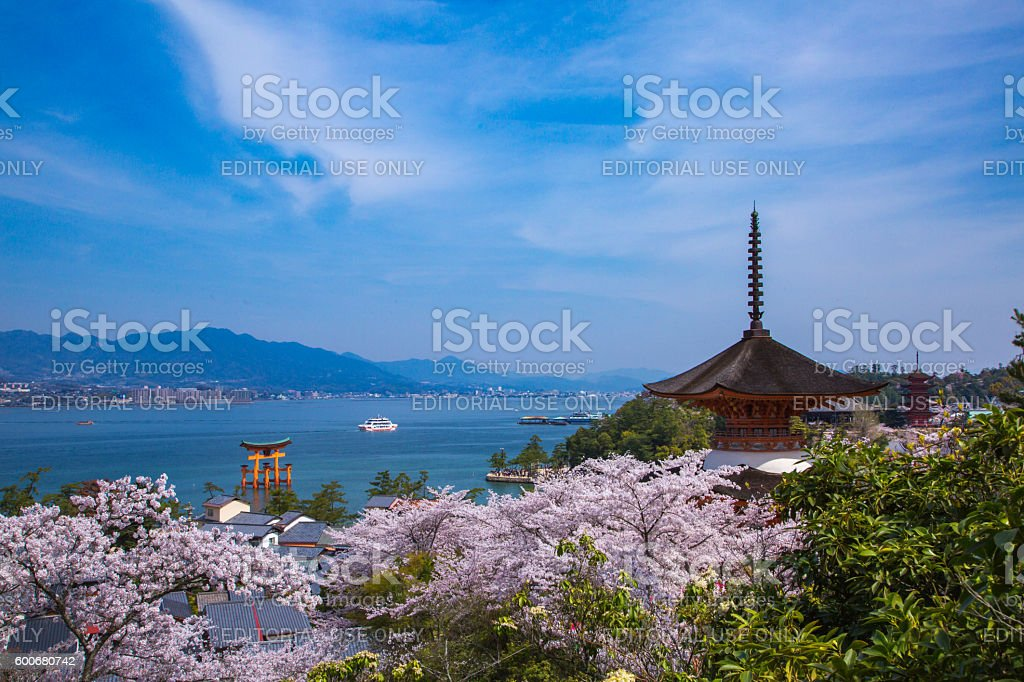Miyajima in the spring when a cherry tree blooms stock photo