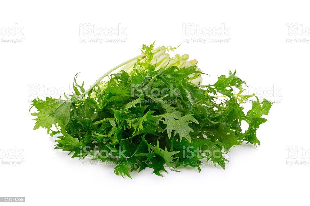 Mizuna greens on white background stock photo