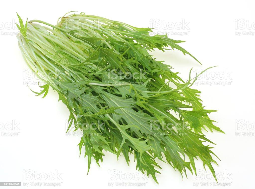 Mizuna greens stock photo