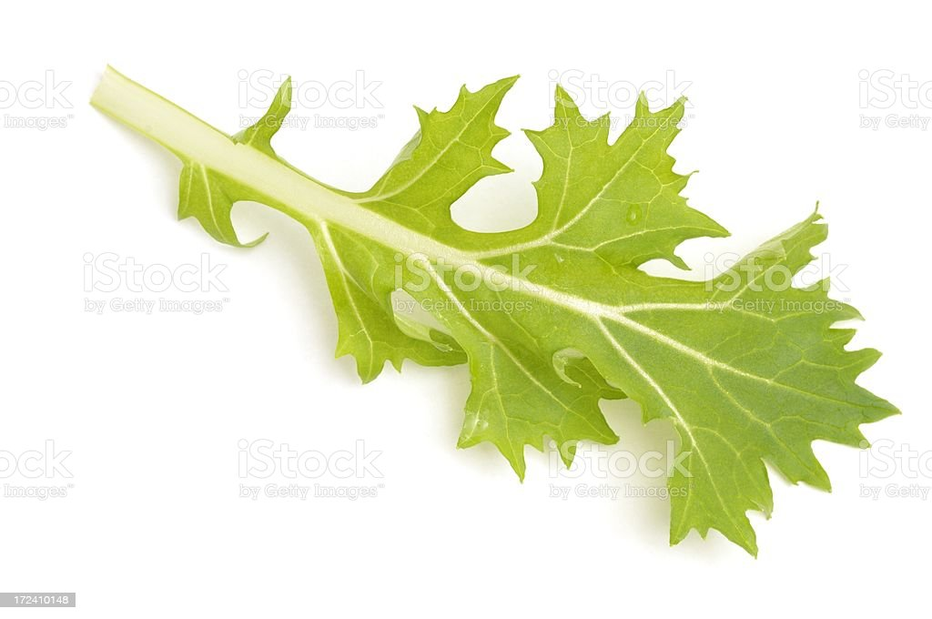 Mizuna leaf from above stock photo