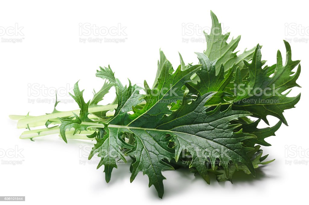Mizuna leafy salad (Japanese mustard), paths stock photo