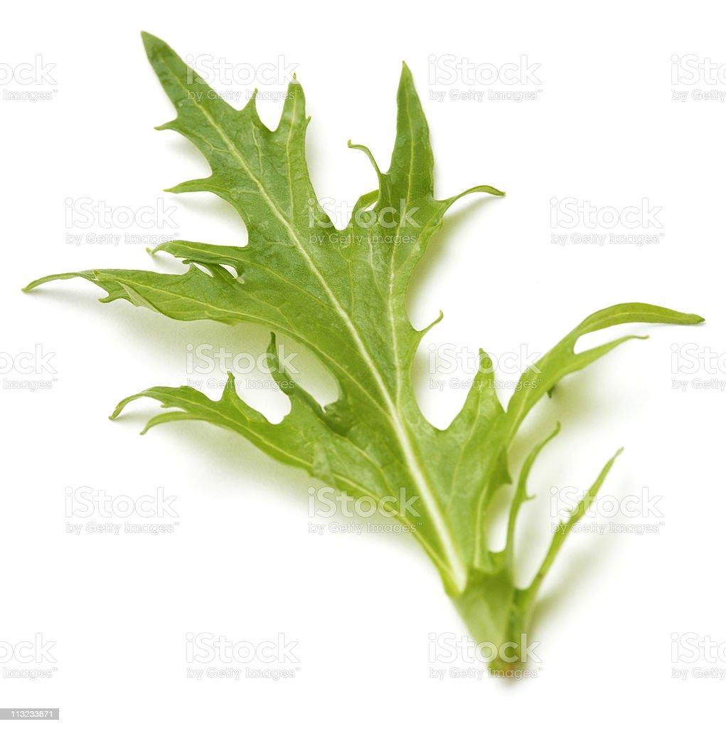 Mizuna salad leaf isolated against white stock photo