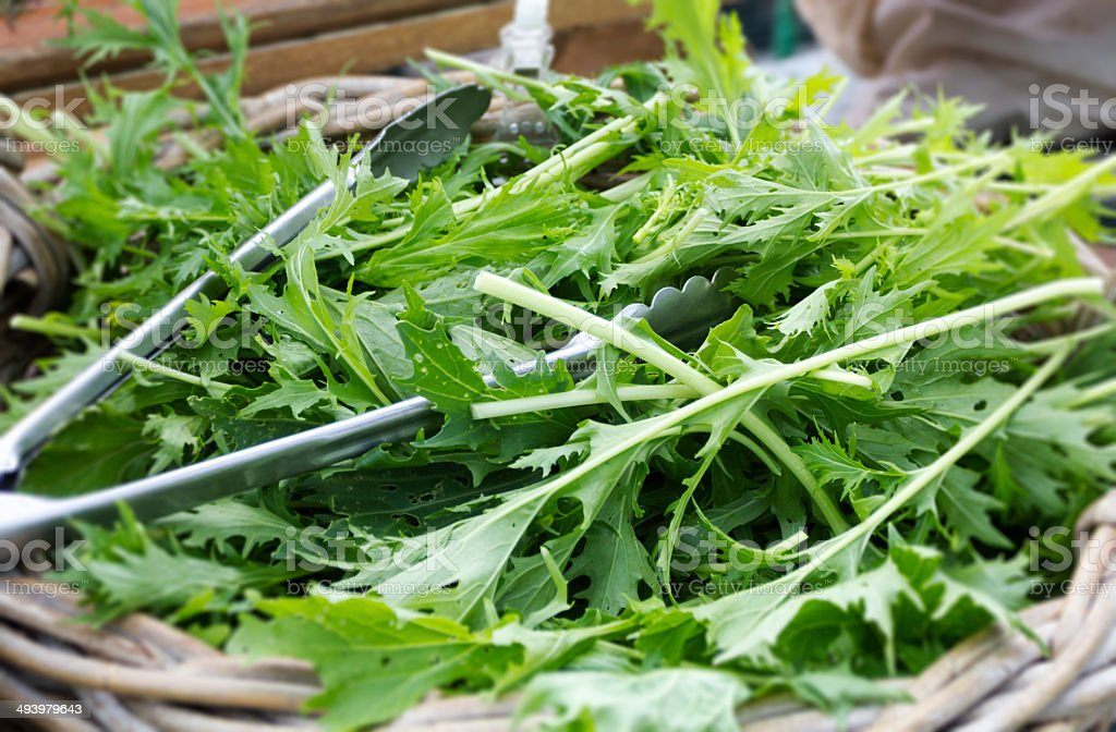 Mizuna vegetable stock photo