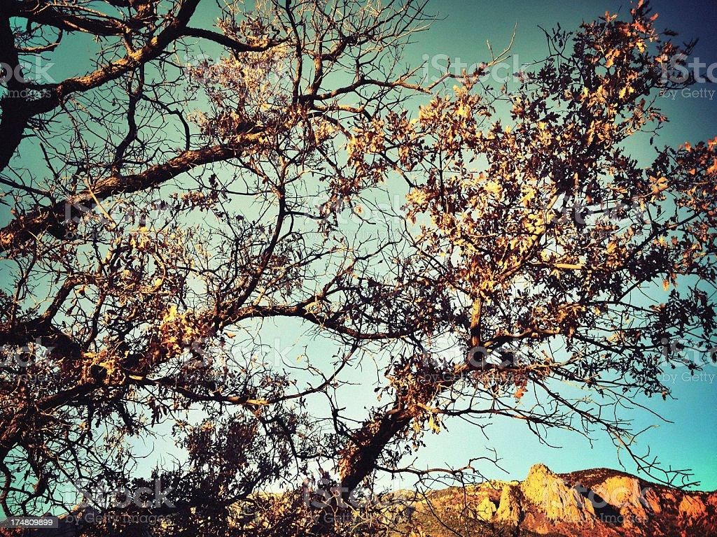 mobilestock landscape sunset royalty-free stock photo