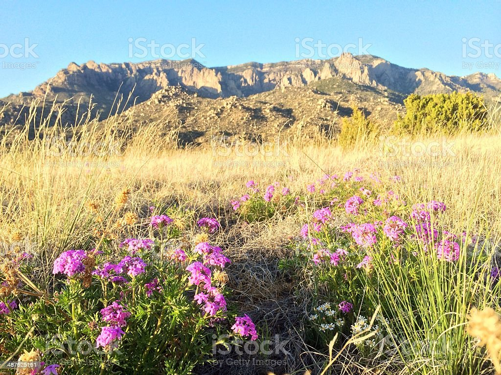 mobilestock nature landscape royalty-free stock photo