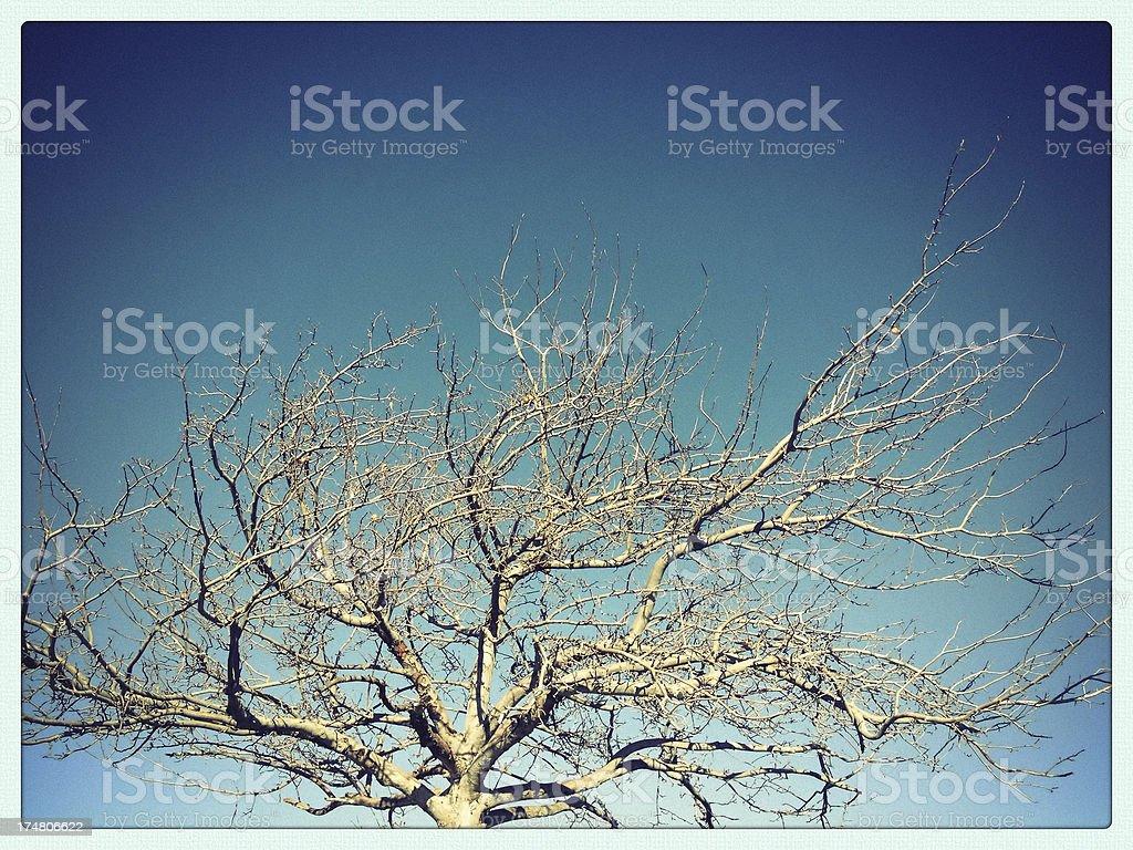 mobilestock simple tree royalty-free stock photo