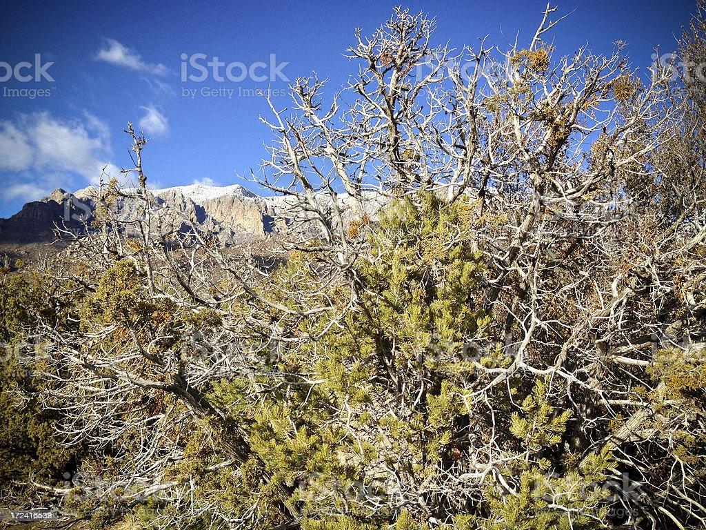 mobilestock southwest landscape royalty-free stock photo