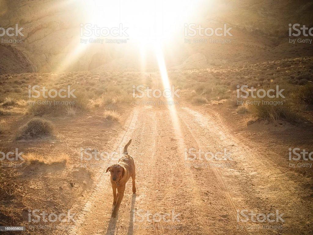 mobilestock sunshine dog stock photo