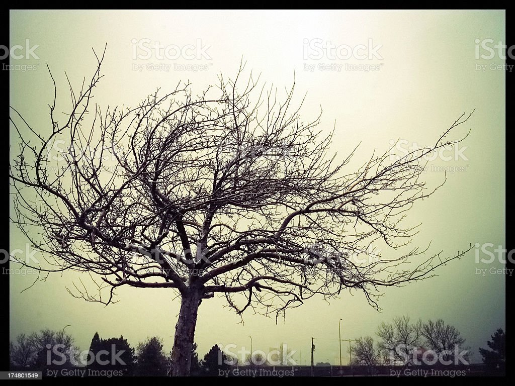 mobilestock tree royalty-free stock photo