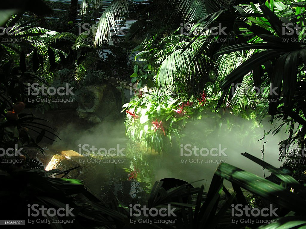 Mock Rainforest stock photo