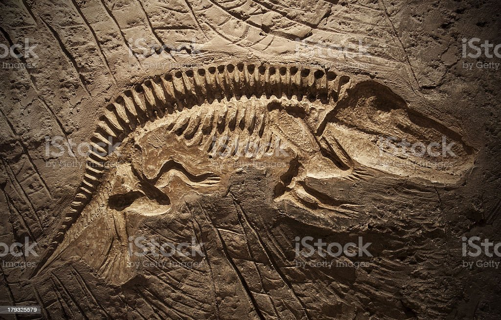 Model Dinosaur fossil stock photo
