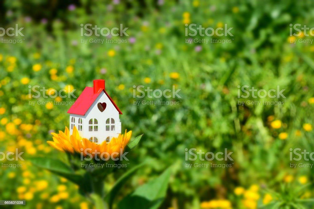 Model of a house on a sunflower, Dream House Concept stock photo