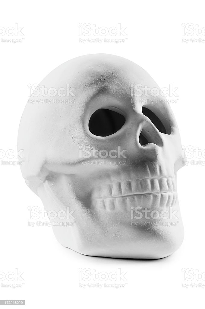 Model of a human skull on a white background stock photo