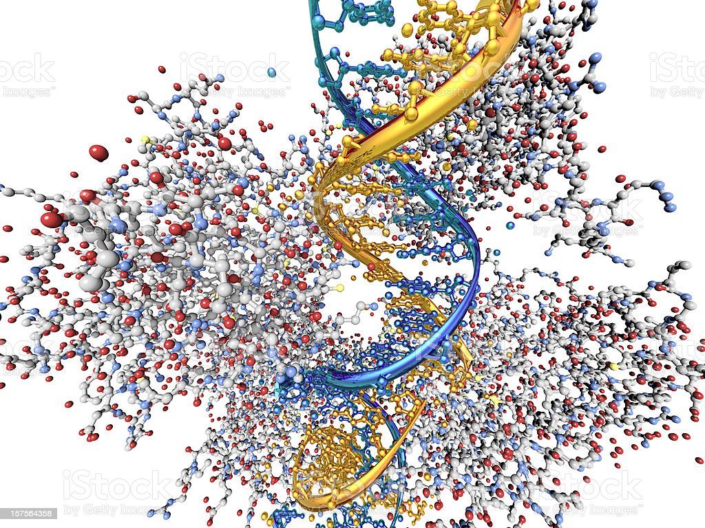 Model of a Tumor-Suppressing Protein Binding to DNA stock photo