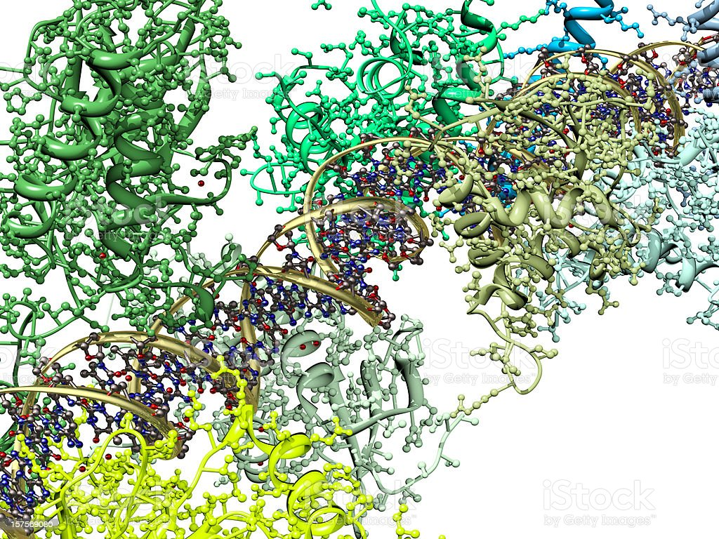 Model of an Enhanceosome Protein Complex Binding to DNA stock photo