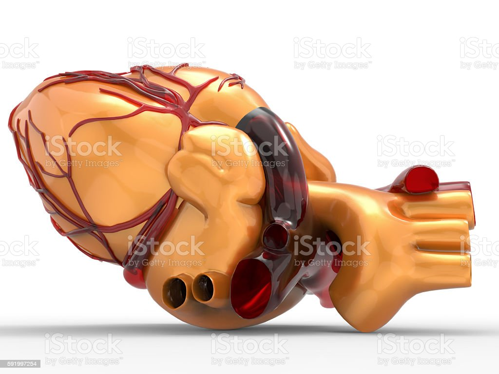 Model of artificial human heart 3d rendering stock photo
